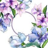 紫色和蓝色德国锥脚形酒杯花 花卉植物的花 框架边界装饰品正方形 库存照片