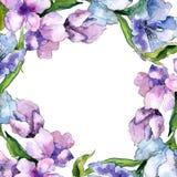 紫色和蓝色德国锥脚形酒杯花 花卉植物的花 框架边界装饰品正方形 免版税库存图片