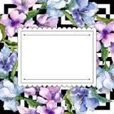 紫色和蓝色德国锥脚形酒杯花 花卉植物的花 框架边界装饰品正方形 免版税库存照片