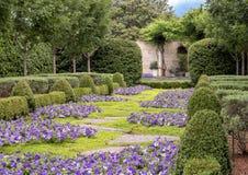 紫色喇叭花床和树篱、达拉斯树木园和植物园 免版税库存照片