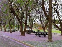 紫色地毯 免版税图库摄影