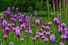紫色多种花色鲜明之植物花 库存图片