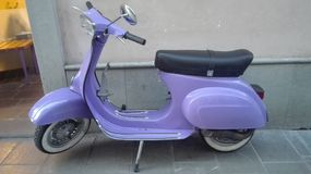 紫色大黄蜂类 库存照片