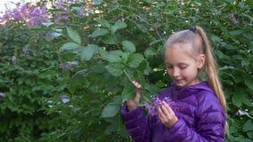 紫色夹克的年轻少年女孩在春天庭院里嗅淡紫色花 接近的画象俏丽的女孩少年 影视素材