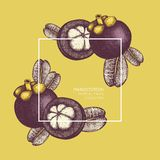 紫色山竹果树果子手拉的例证 被刻记的植物的剪影 热带常青树设计 库存例证