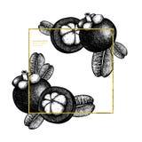 紫色山竹果树果子手拉的例证 被刻记的植物的剪影 热带常青树设计 另外的多孔黏土eps格式框架金以图例解释者包括 库存例证