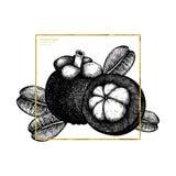 紫色山竹果树果子手拉的例证 被刻记的植物的剪影 热带常青树设计 另外的多孔黏土eps格式框架金以图例解释者包括 皇族释放例证