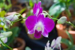 紫色庭院的兰花 免版税库存图片