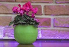 紫色房子在一张木桌上的一个绿色圆的罐开花在砖墙背景 库存图片