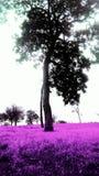 紫色林场 免版税库存图片