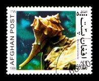 紫色染料骨螺等(骨螺等brandaris),蜗牛serie,大约1999年 库存图片