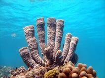 紫色海绵管 库存图片