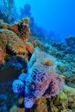 紫色海绵花瓶 免版税库存图片