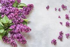 紫色淡紫色花花束与空间的文本的 顶视图 免版税图库摄影