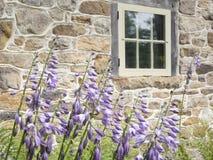 紫色玉簪属植物花对一个石墙 免版税库存照片