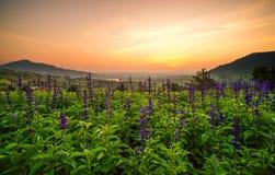 紫色白花的郁金香和美好的风景 免版税图库摄影