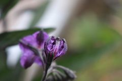 紫色美丽的花 免版税库存图片