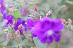 紫色花园 库存图片