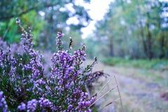 紫色花在森林里 图库摄影