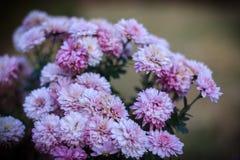 紫色花在植物园里 免版税库存照片