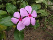 紫色花夫妇 免版税库存照片