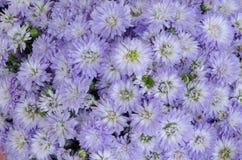 紫色花束 免版税库存图片