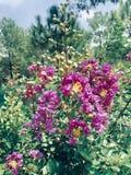 紫色花植物 免版税图库摄影