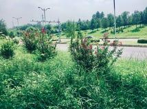 紫色花植物 免版税库存照片