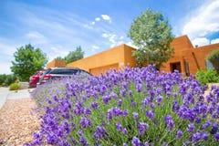 紫色花灌木在后院 库存照片