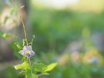 紫色花背景空间为写道 免版税库存图片