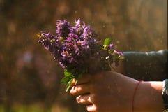 紫色花花束在手上有晴朗的尘土的 免版税库存照片