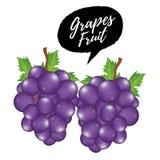 紫色葡萄例证 向量例证