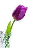 紫色郁金香花瓶 免版税库存图片
