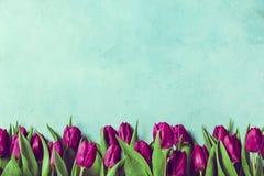 紫色郁金香边界 免版税图库摄影