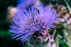 紫色钉 免版税库存图片