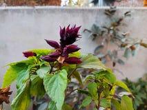 紫色黑花 免版税库存图片