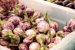 紫色,白色和绿色泰国茄子茄属melongena 库存照片
