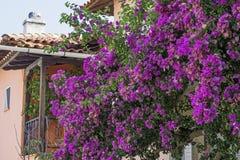 紫色Leander花 库存图片