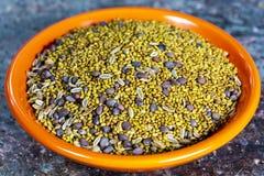 紫花苜蓿未加工的种子、萝卜和茴香准备好发芽在瓶子用水,健康素食主义者和素食主义者食物 免版税库存图片