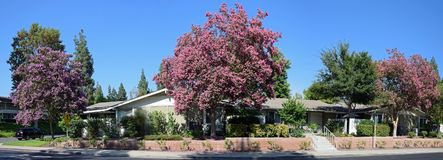 紫薇,一般叫作绉绸桃金娘或绉绸桃金娘 免版税库存照片