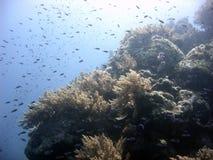 繁忙的礁石 免版税库存照片