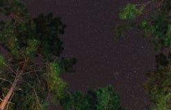 繁星之夜与树的行动天空 免版税图库摄影