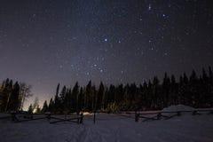 繁星之夜常青树 免版税库存图片