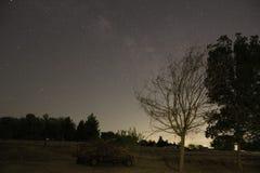 繁星之夜领域风景-死的树 库存照片