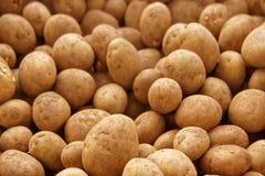 繁殖土豆 免版税库存照片