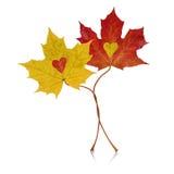纠缠的秋天 库存照片