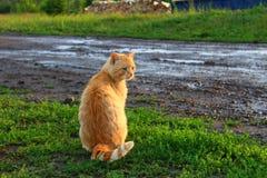 红发猫 免版税图库摄影