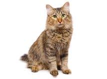 红发的猫 免版税库存图片