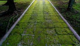 红土带路在庭院里 库存照片