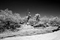 红外地面蛇沙漠亚利桑那 免版税库存照片
